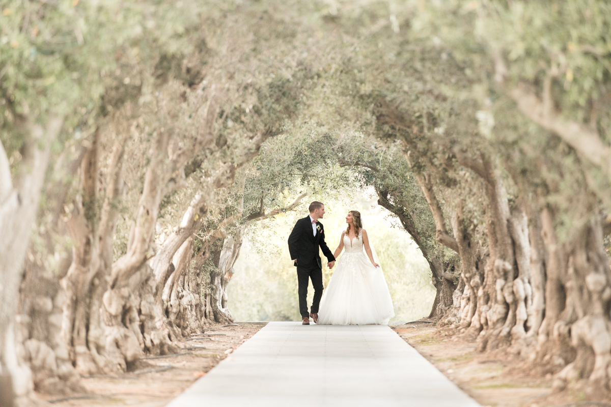 olive grove wedding at sycamore creek wedding