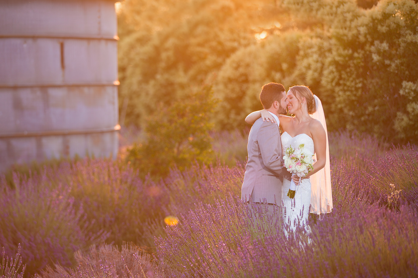 Pageo Lavender Farm Wedding Photo: Bride and groom take photos at sunset in the lavender fields at Pageo Lavender Farm
