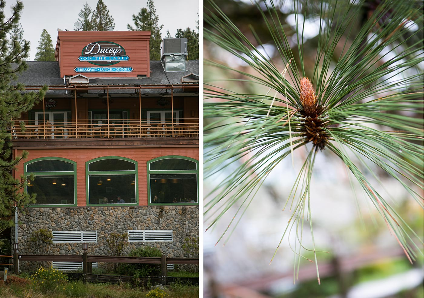 pines-resort-wedding-3