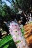 santa_barbara_wedding_photographer_hummingbird_nest_ranch_wedding_024