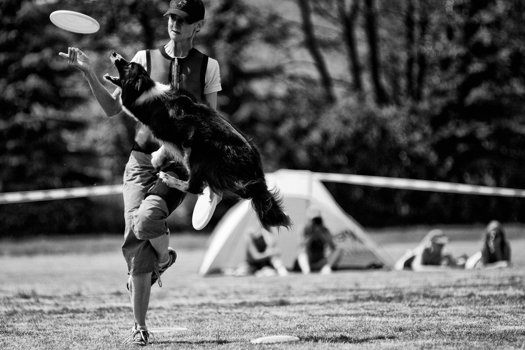 Lyra performs a leg vault during freestyle program of the Fun Factory for Frisbee competition in Blsany, Czech Republic, June 4, 2011. Vaults are the most creative tricks in freestyle, because handlers discover new ways of execution. Dogs now push off from everywhere: legs, back, chest etc.