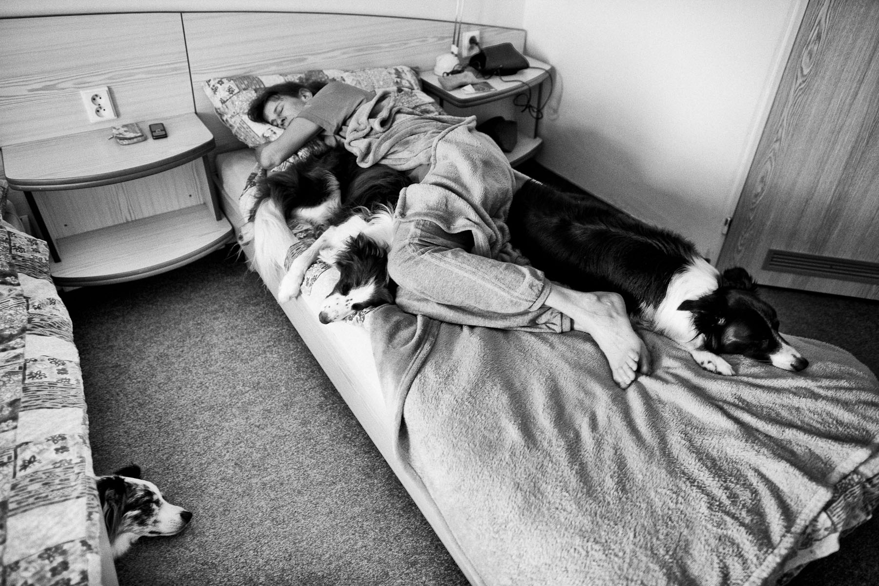 Jean and her champion dogs during an afternoon nap in a hotel room in Blsany, Czech Republic, June 4, 2011.