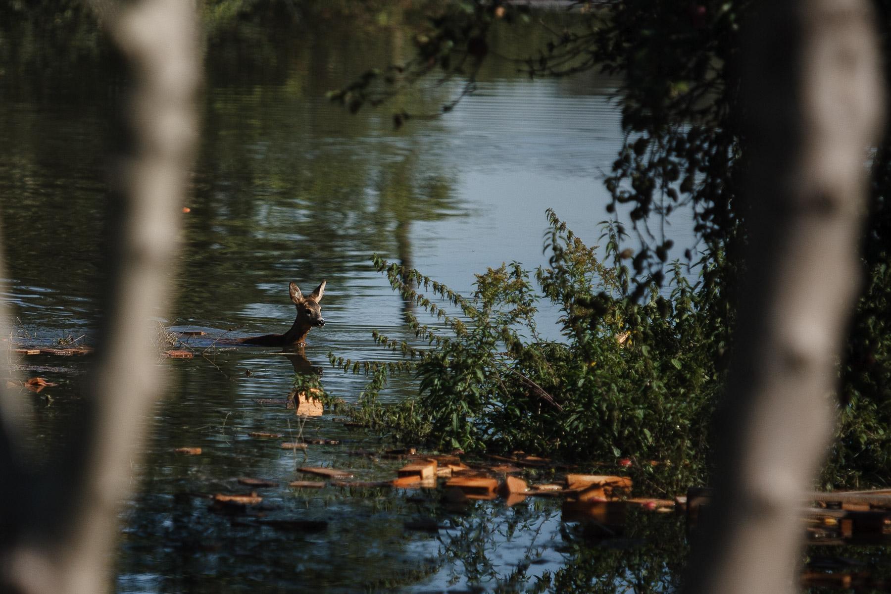 FloodsInSlovenia2010-photoLukaDakskobler-046