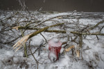 A frozen fire hydrant is seen among broken tree branches in Postojna, Slovenia, February 5 2014.