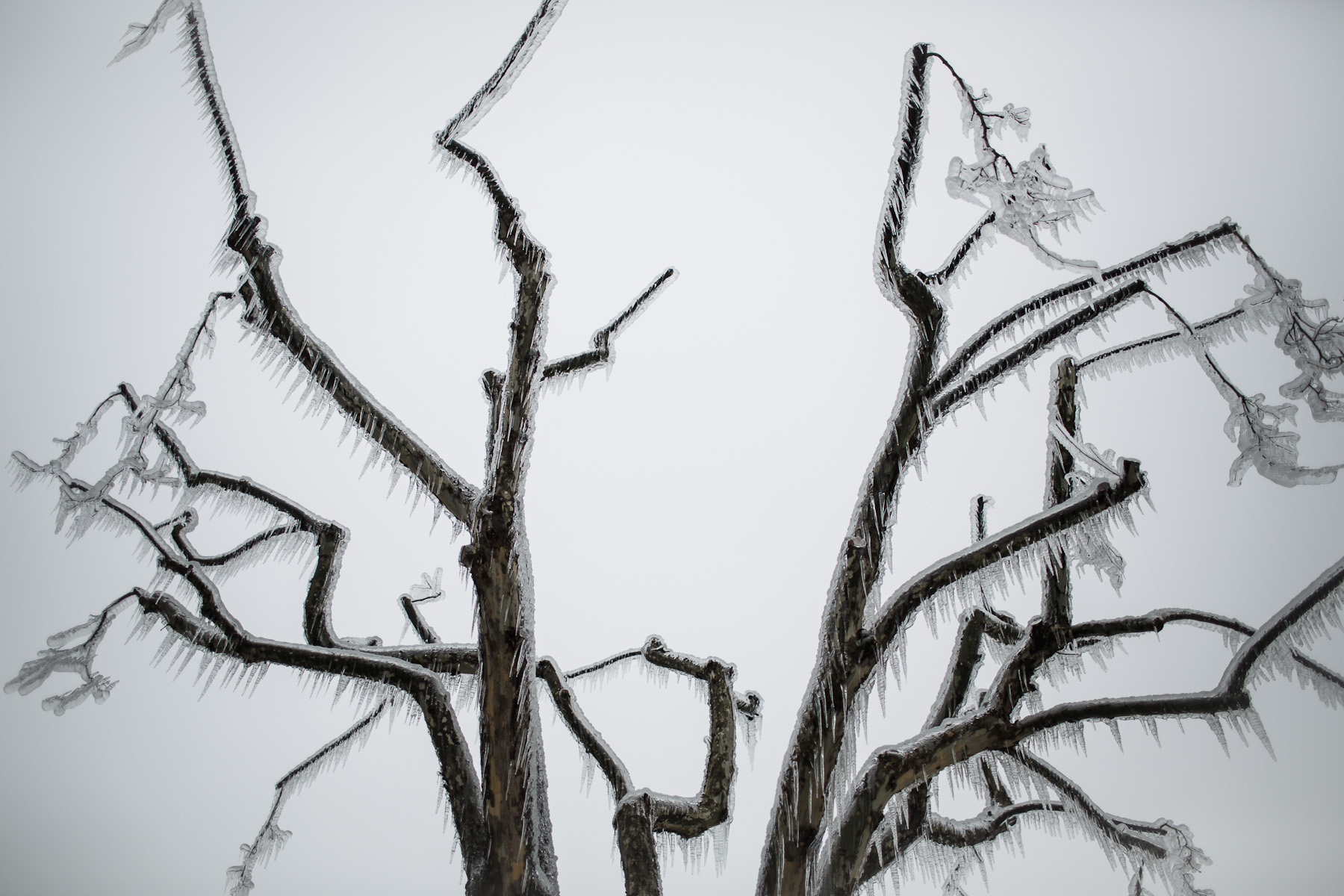 Frozen trees are seen in Postojna, Slovenia, February 5 2014.