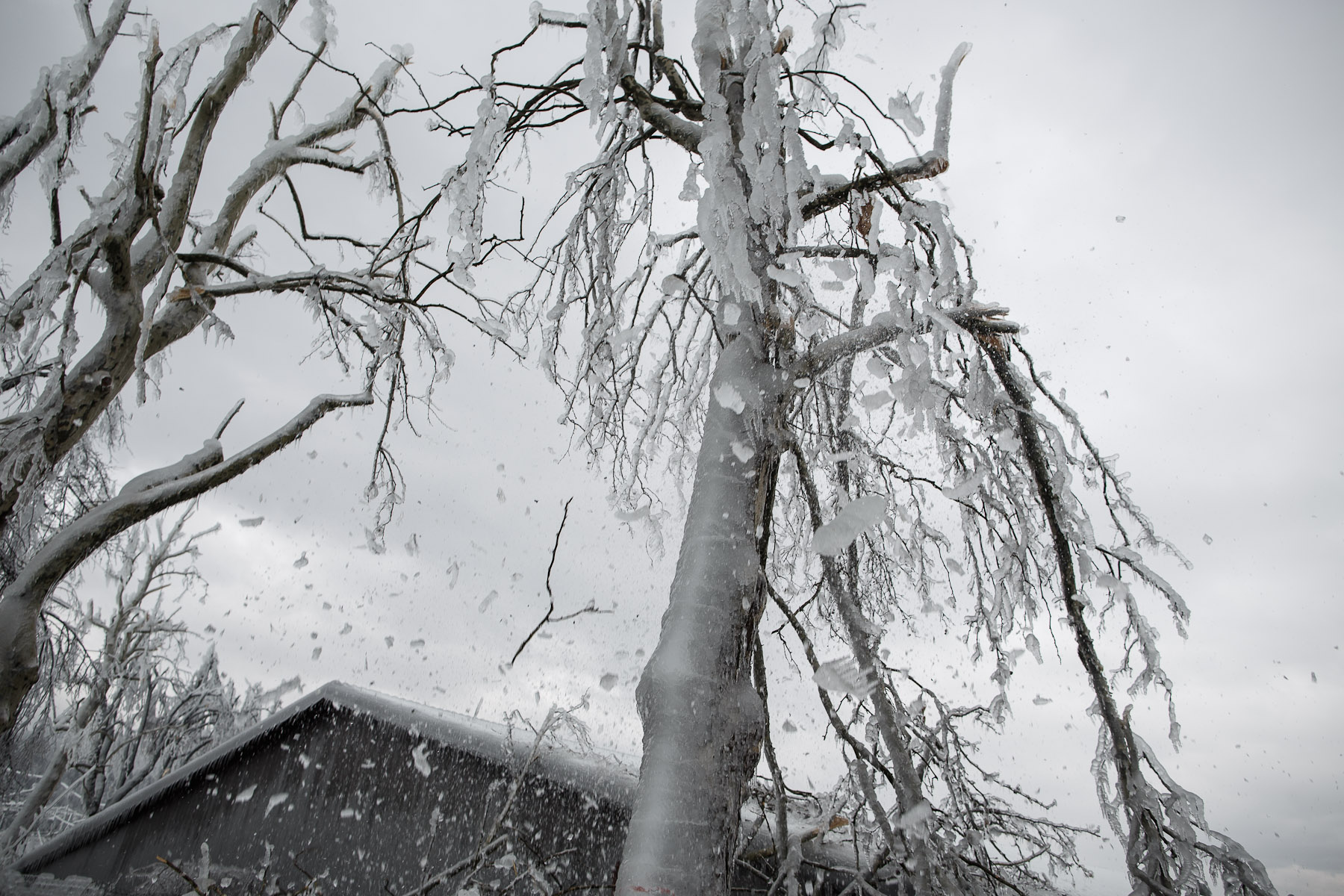 Ice and broken branches are seen crashing down from frozen trees in Postojna, Slovenia, February 5 2014.
