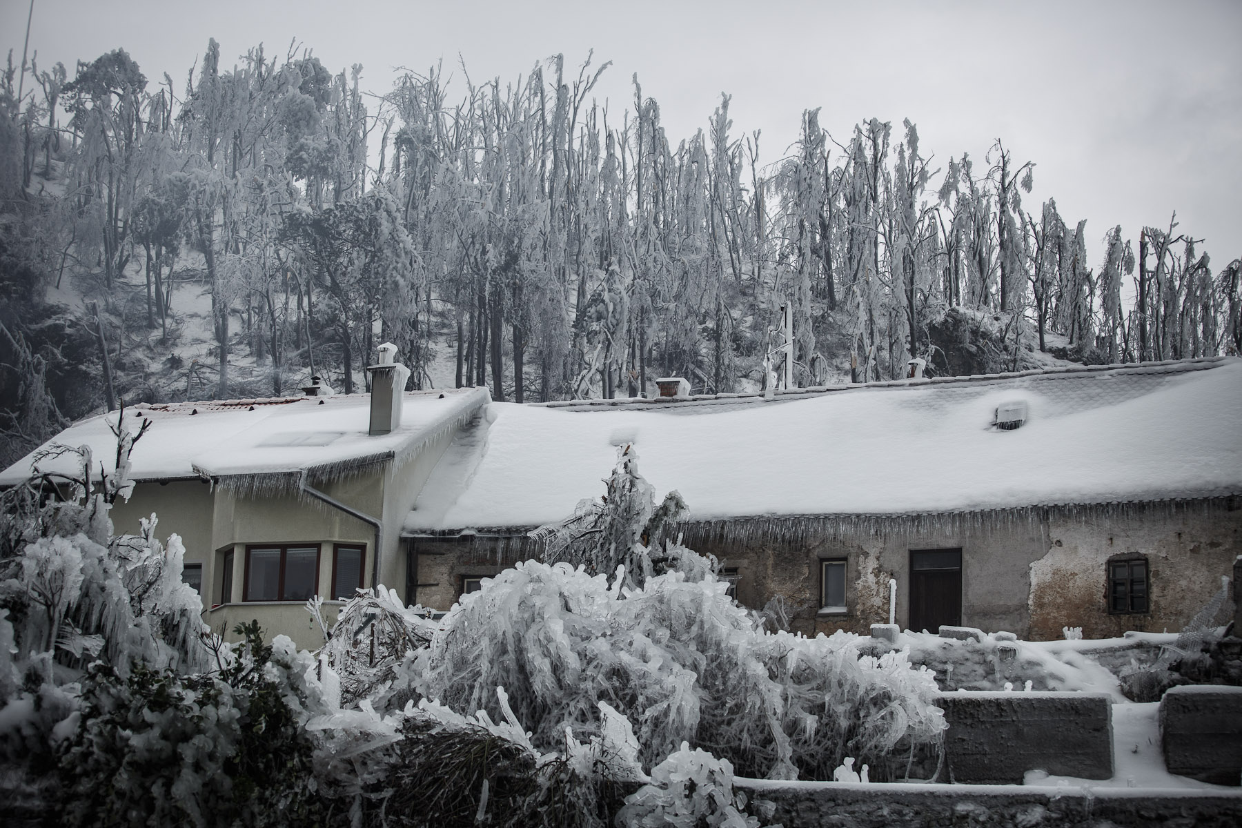 A house is seen among broken trees in Postojna, Slovenia, February 5 2014.