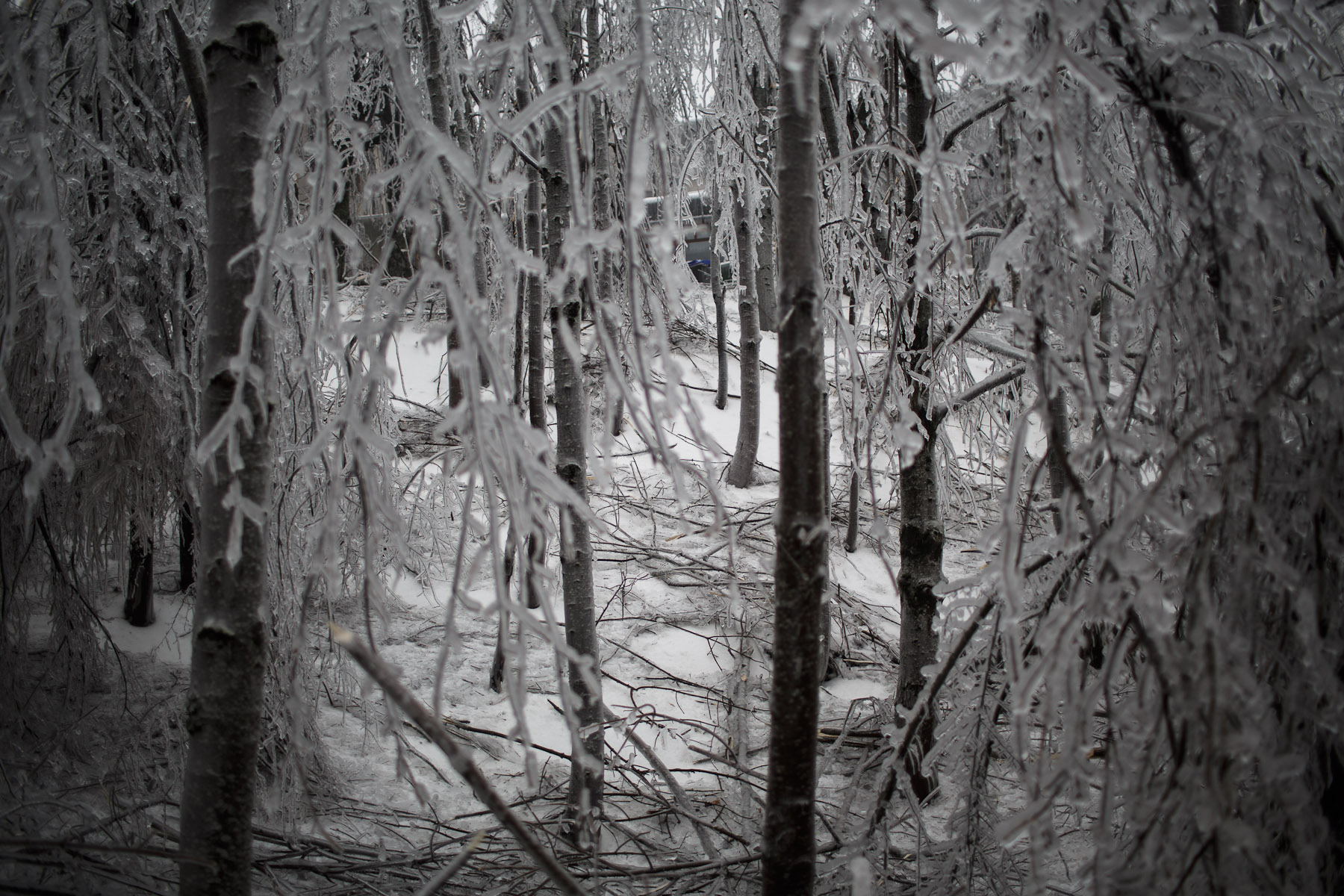 Broken branches are scattered on the ground in a forest in Postojna, Slovenia, February 5 2014.
