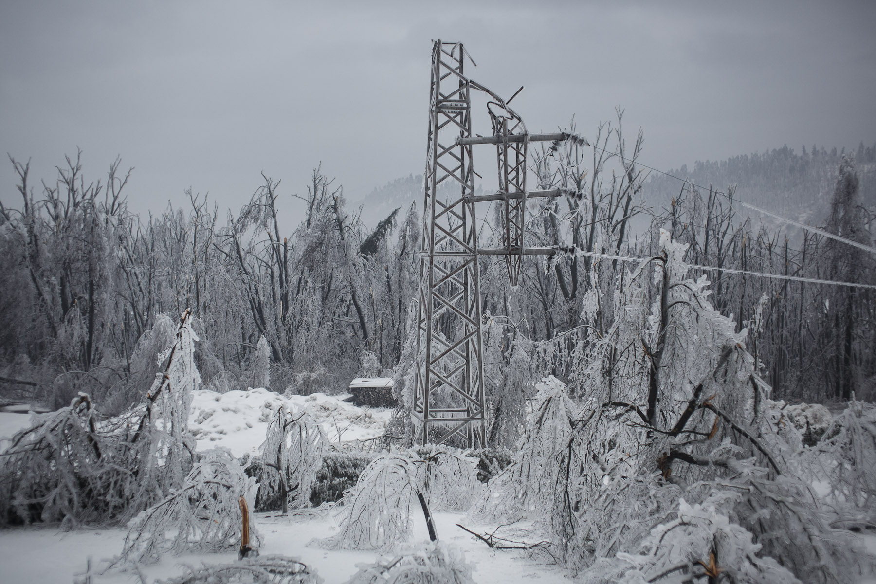 A  broken power line is seen among a forest of broken trees in Postojna, Slovenia, February 5 2014.