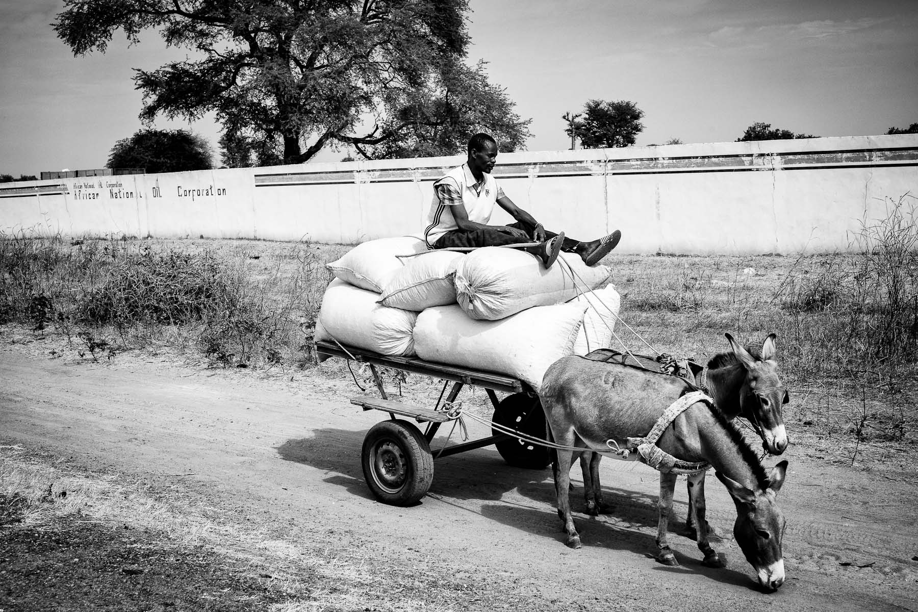 A man transporting peanuts passes the headquarters of the Italian company African National Oil Corporation in the region of Kaolac, Senegal, on January 10, 2014. The company first come to the region in 2007 aiming to buy the land for jatropha plantations for production of biofuels. Biofuels would subsequently also be used as fuel for cars in Europe. Since 2007, the company acquired a massive area of land by promising villagers that they will be regularly employed in the company, if they would sell more than 5 ha of their land. They did not keep that promise, leaving villagers without land to grow sufficient amount of food or to gain additional income.