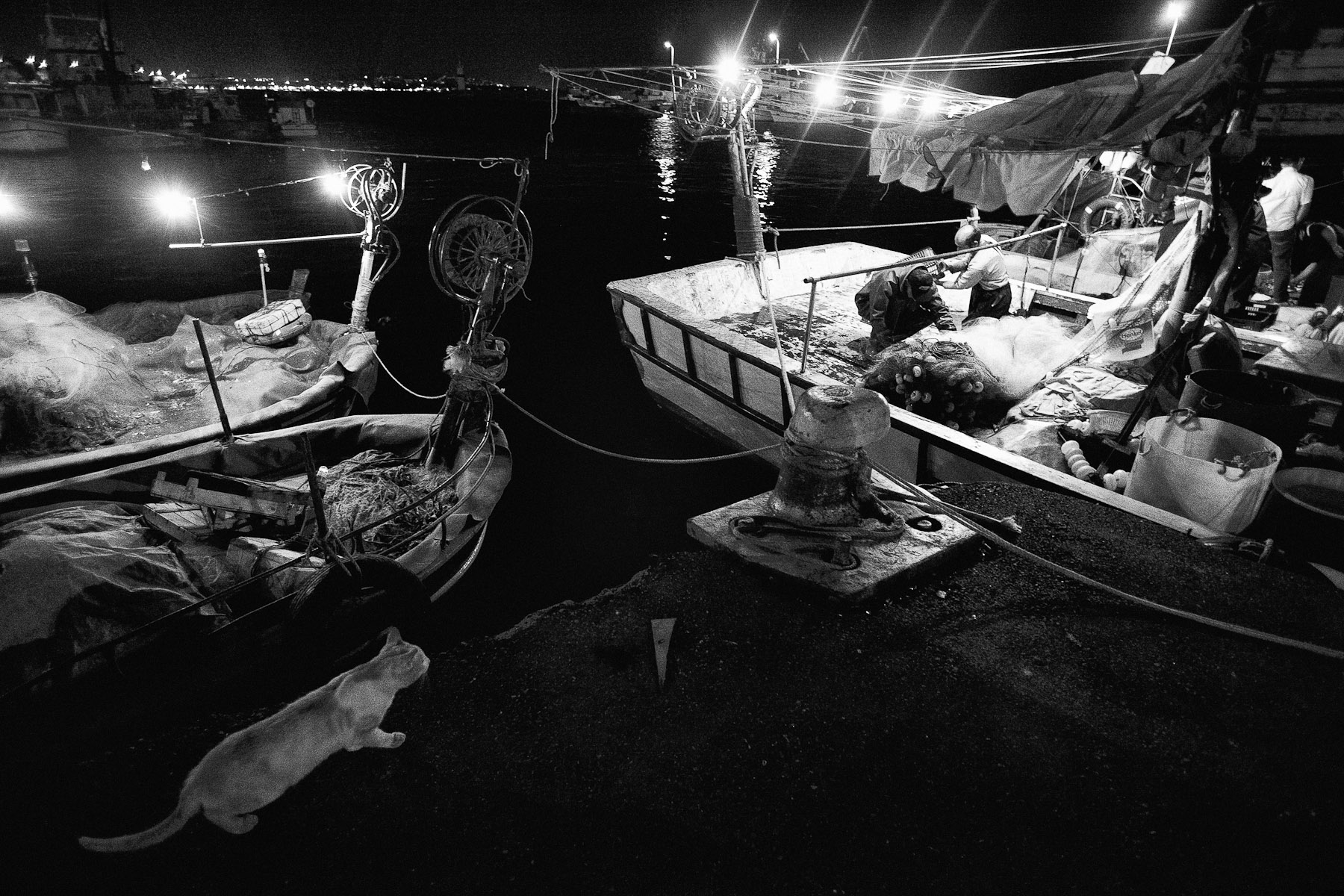 At six or seven in the morning, both boats return to the dock in Kumkapi district of Istanbul, just next to the distribution bazaar. Awaited by seagulls and an occasional cat. The bazaar is full by then.