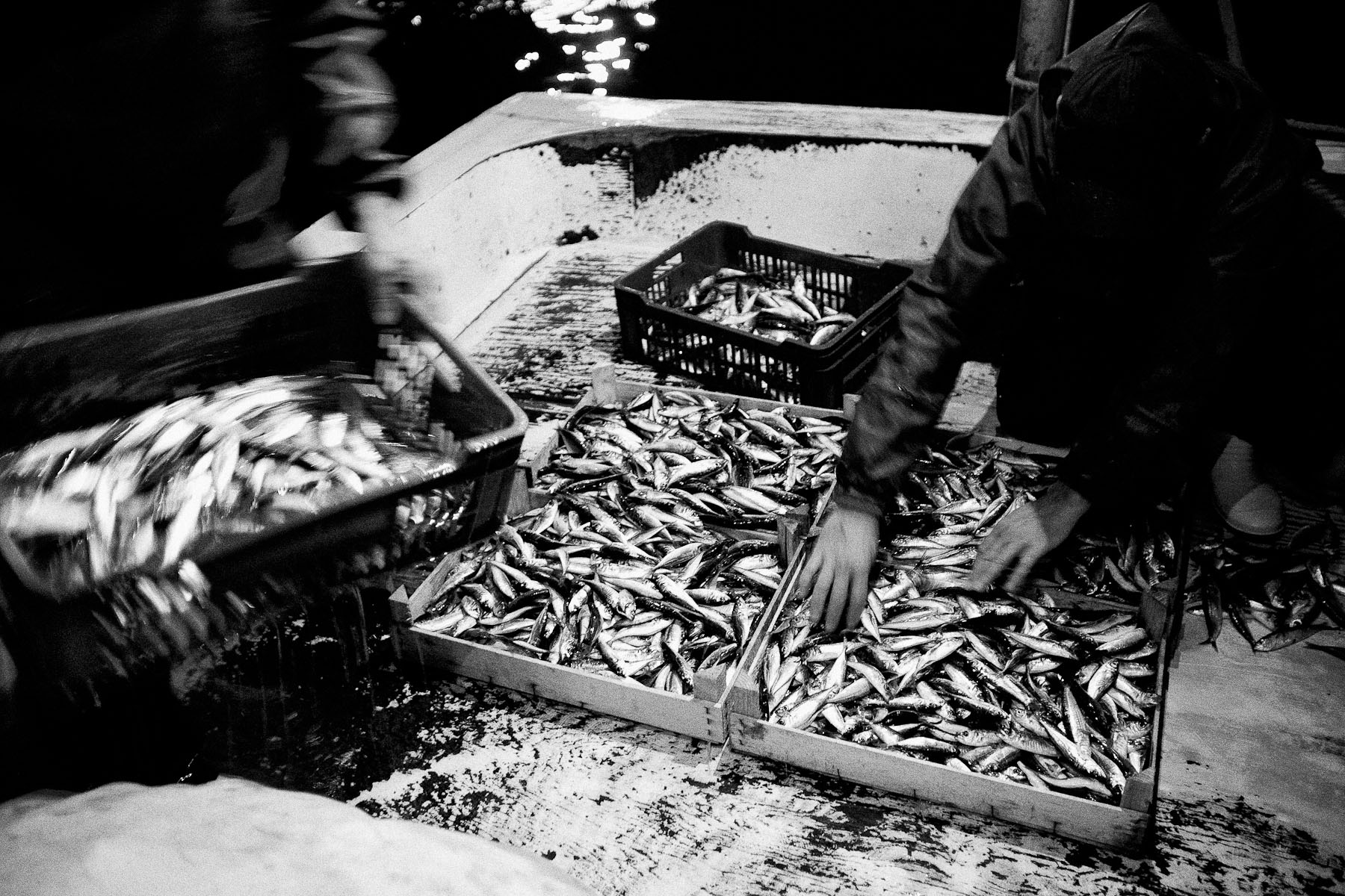 At the docks in Kumkapi, fishermen put the fish into wooden caskets that they carry to the distribution bazaar to sell them on the morning of 22nd June 2010, after they'had been fishing for the entire night.