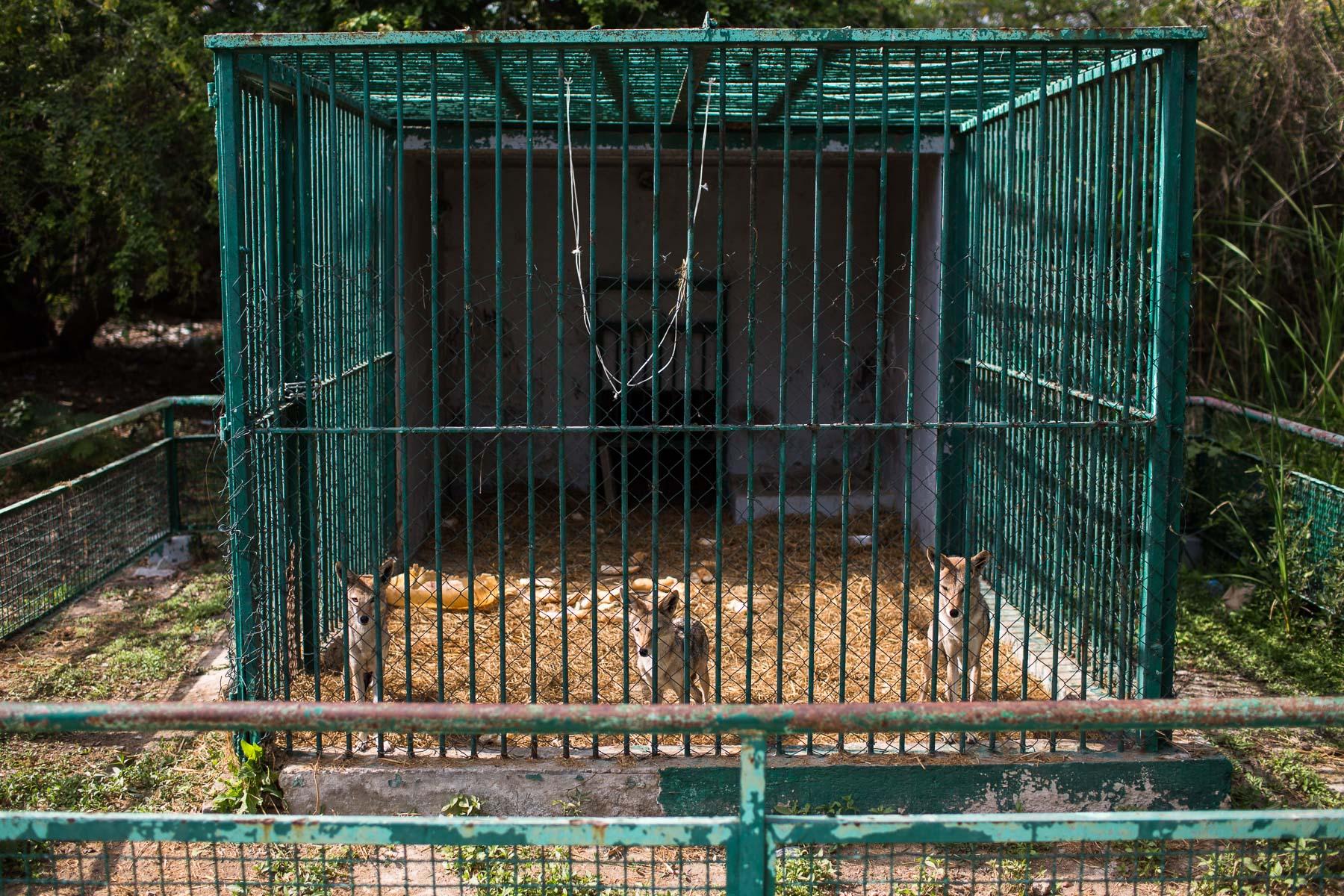 Dakar Zoo