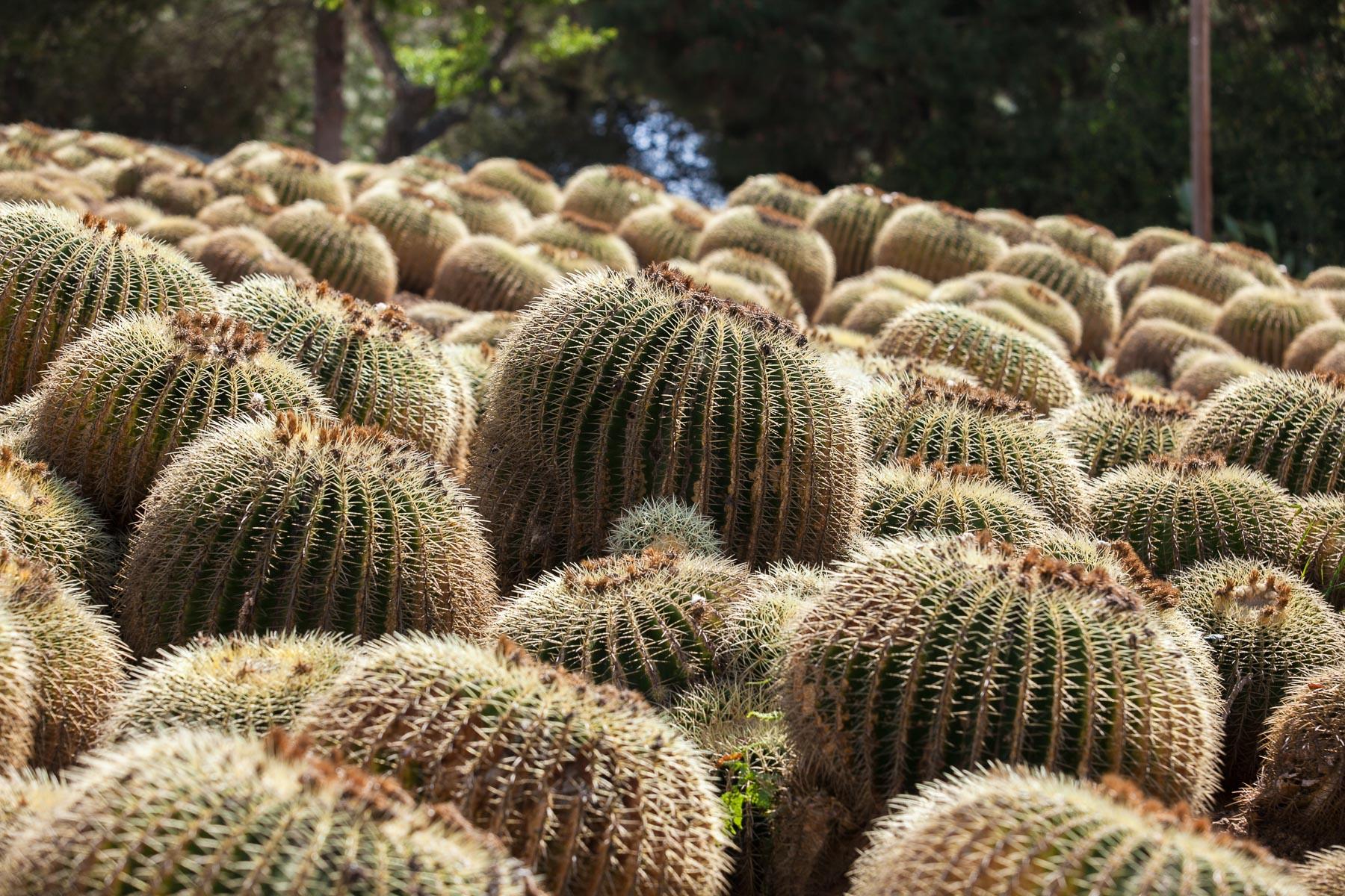 Pinya de Rosa botanic gardens, Costa Brava