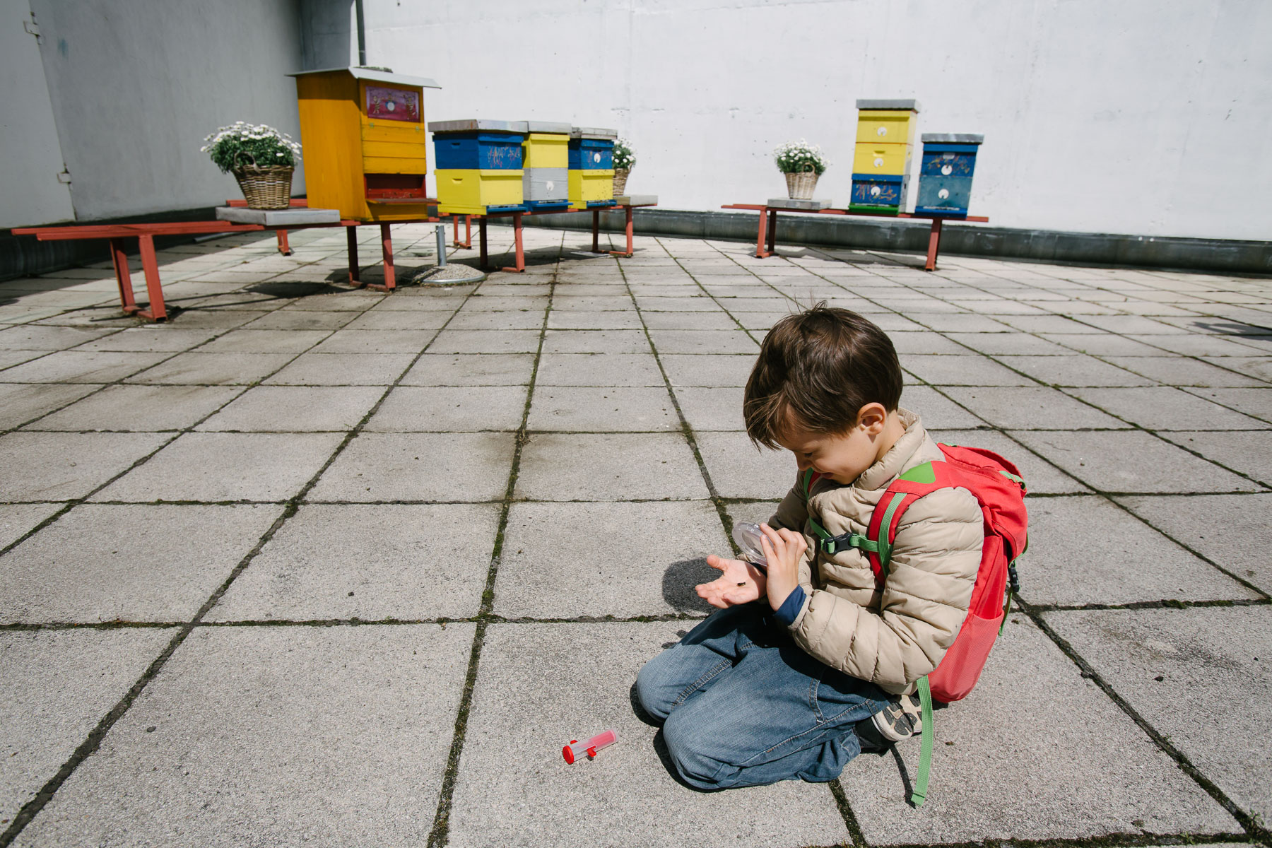 A boy inspects a bee during Petrovčič's presentation on the rooftop of Cankarjev dom Cultural Center.