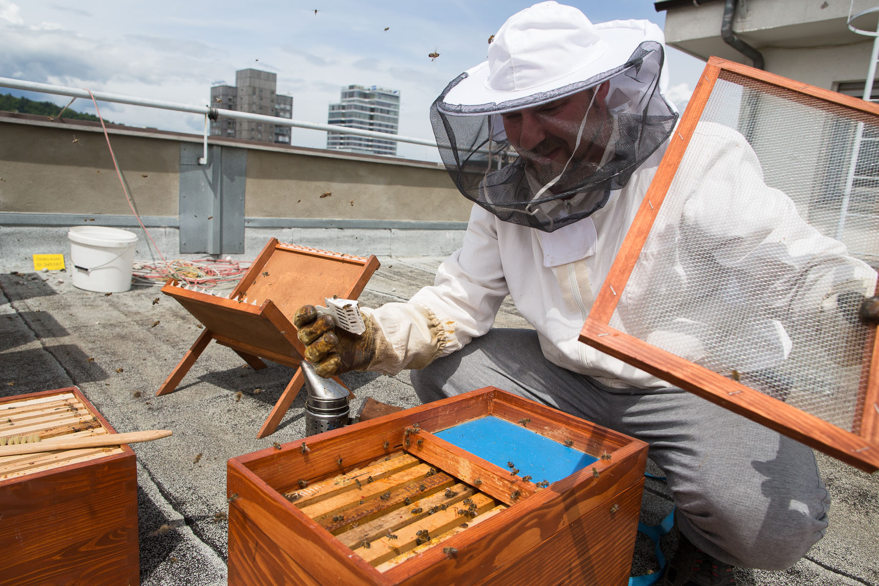 Trušnovec removes the bee queen from a hive on the rooftop of Radio Slovenia.