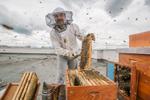 Gorazd Trušnovec, urban beekeeper
