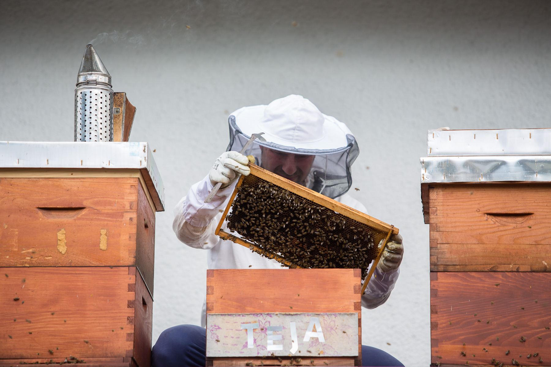 Trušnovec inspects the beehives on the roof of the entrance to Omega Air company in Ljubljana, one of several companies that rent hives from his society. It is popular to name the hives to define which bees symbolically belong to who, in this case the hive that carries the name Teja houses bees that belong to a daughter of an employee. The rent a hive service is booming, but keeps Gorazd extremely busy maintaining the hives of clients. The honey they produce belongs to the clients.