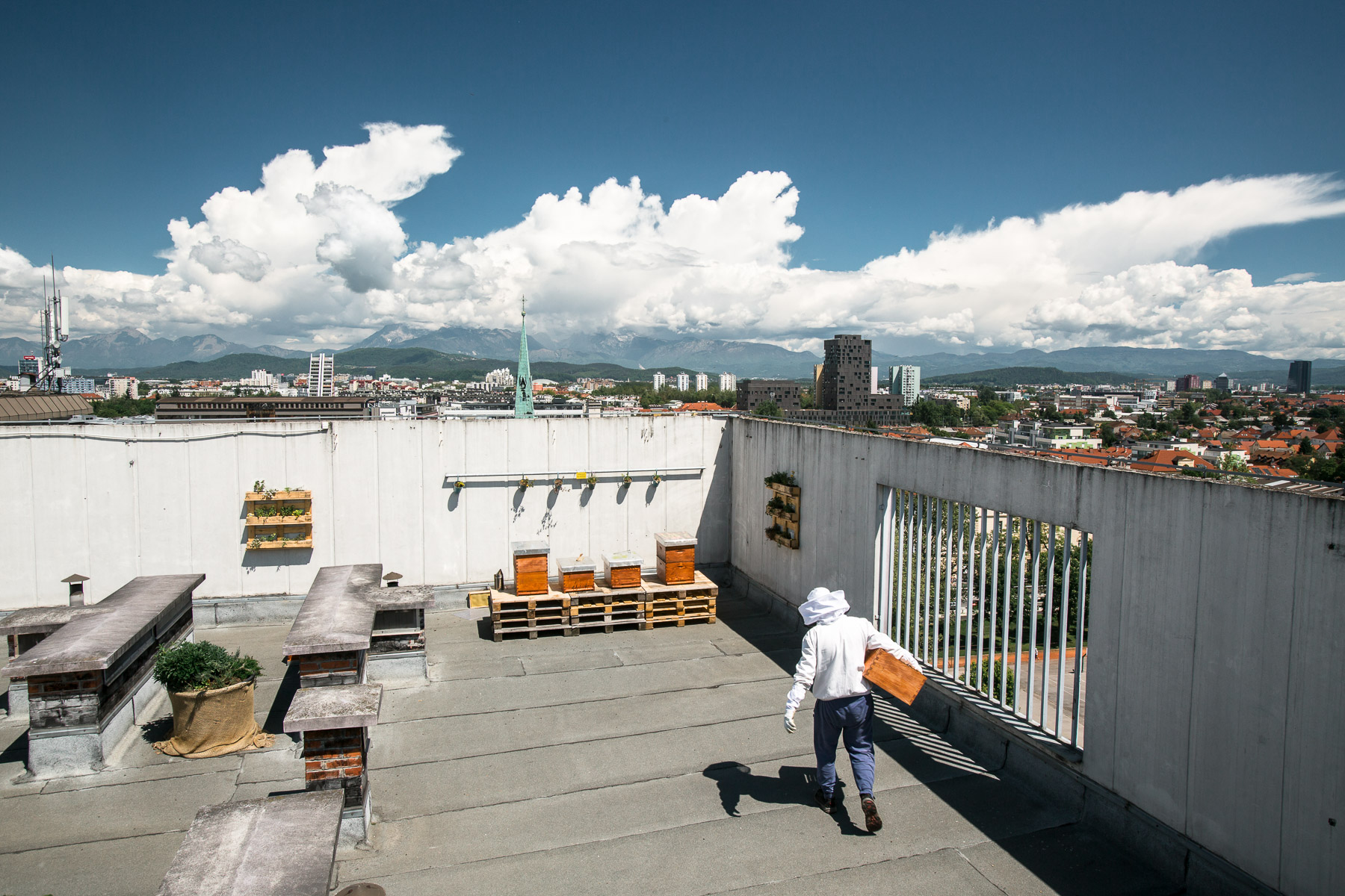 Trušnovec arrives to divide a full beehive on the roof of 13-storey Hotel Park in the city centre of Ljubljana, the highest dwelling of bees in the city.