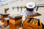 Trušnovec inspects the beehives on the roof of 13-storey Park Hotel in the city centre of Ljubljana, the highest dwelling of bees in the city.