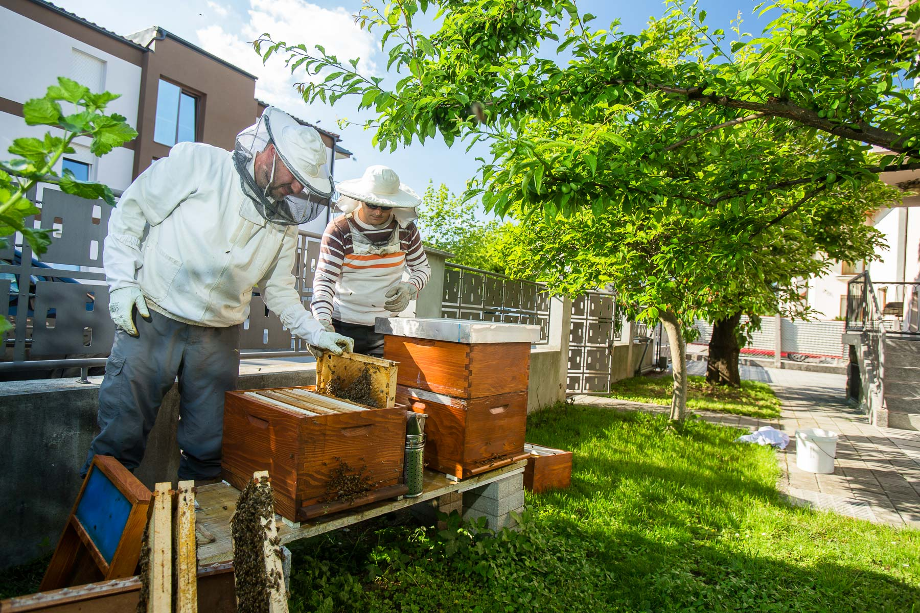 Individual or families also rent a hive from Trušnovec to put it in their garden in front of their house, but it is still rare. These hives are also maintained by Trušnovec and the honey that those bees produce belongs to the renter.