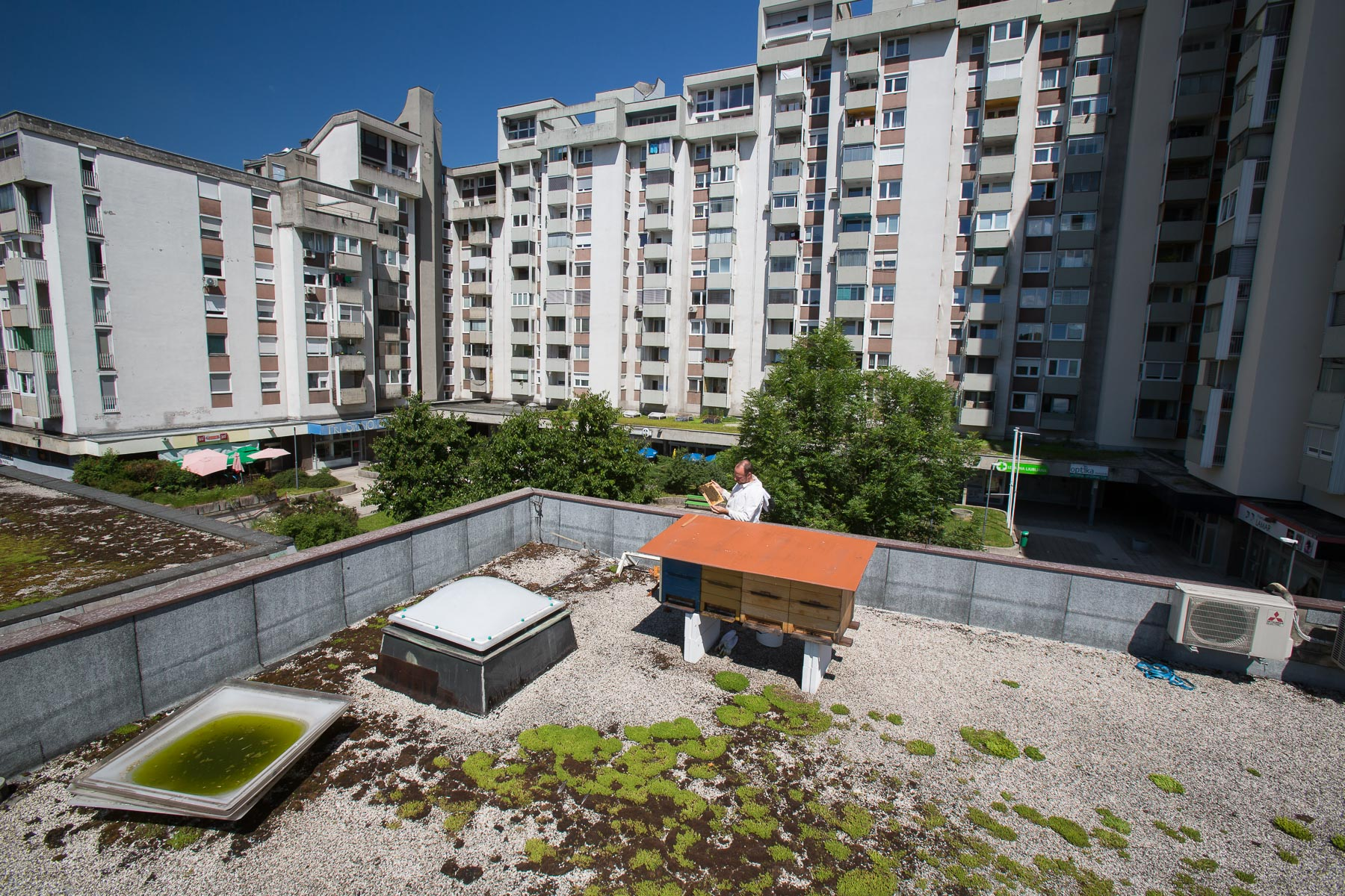 The beehives on the rooftop of Španski borcu cultural center are embraced by apartment buildings on one side while the other side is open towards the Golovec hill.