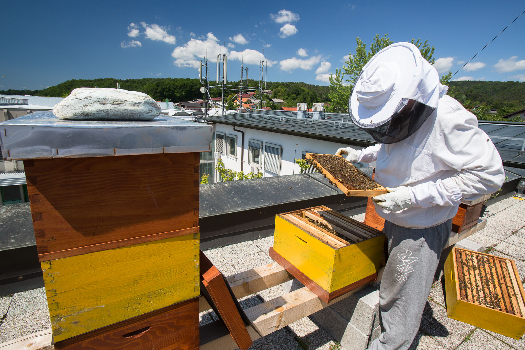 Trušnovec inspects the beehives on the roof of Semenarna Ljubljana, a leading seed-providing company in Slovenia. It is located just across from a large shopping area with numerous shopping malls and big stores etc.