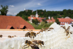 Bees on a honeycomb on the roof of the the Urban Planning Institute of the Republic of Slovenia in Ljubljana.