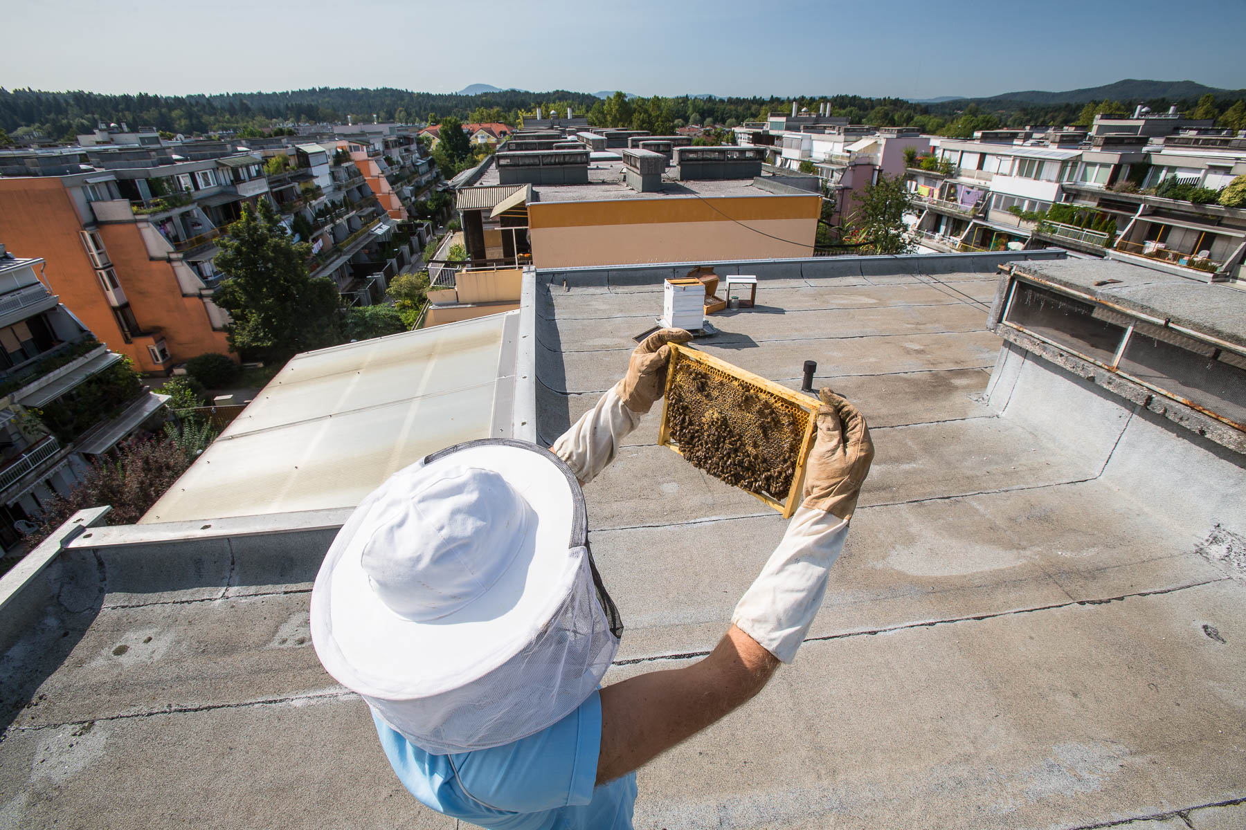 Urban beekeeper Peter Pečenko inspects beehives on the rooftop of his apartment building in Koseze.