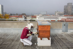 Nearing the end of the bee season, Trušnovec fights the spreading of varroa by administering oxalic acid via sublimator vaporizer on the rooftop of Radio Slovenia.