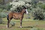 Mesa, Arizona(Equus ferus)Image No: 20-002999Click HERE to Add to Cart