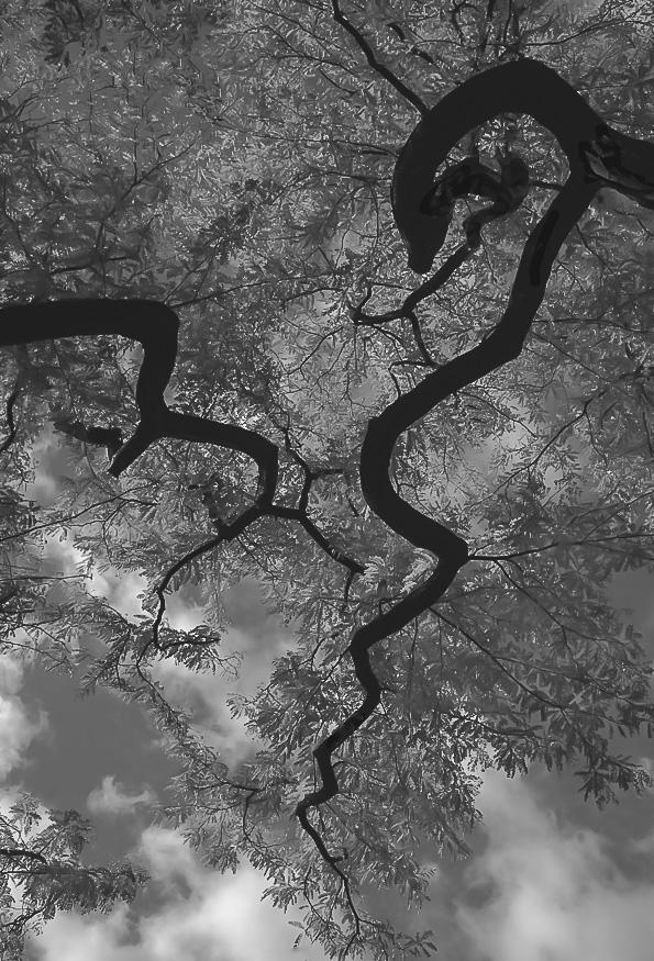 JAG_TREE