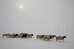 mongolia_gallery023