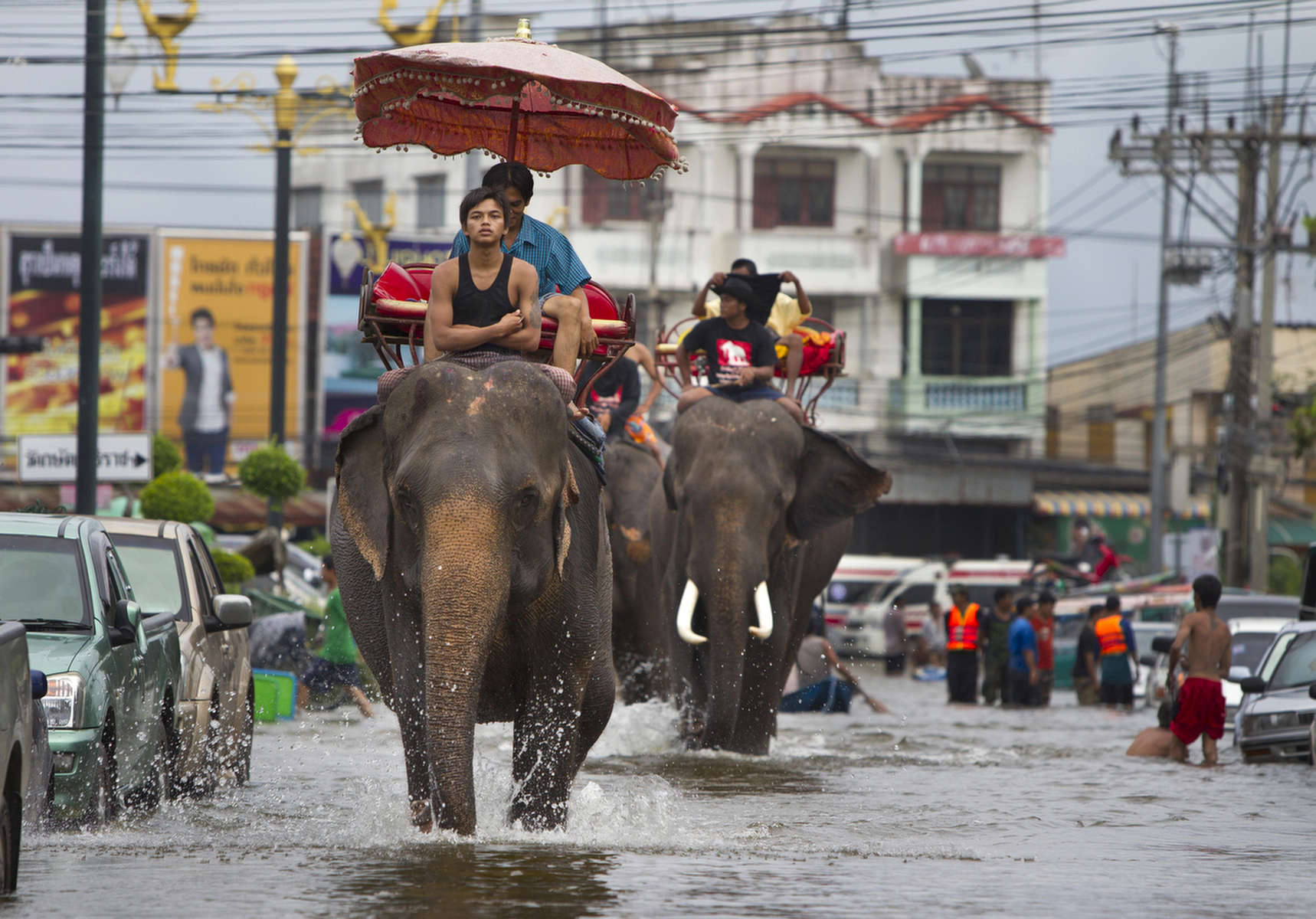 AYUTTHAYA,THAILAND - OCTOBER 10TH:  Thai mahouts ride their elephants through the flooded streets October 10, 2011 in Ayutthaya, Thailand. The elephants are from a nearby elephant camp. Around 200 factories closed in the central Thai province of Ayutthaya because of flooding, which is posing a threat to Bangkok as well. Over 260 people have died in flood-related incidents since late July according to the Department of Disaster Prevention and Mitigation. Some areas of the country are experiencing the worst flooding in 50 years, mainly in the centre, north and northeast.(Photo by Paula Bronstein /Getty Images)