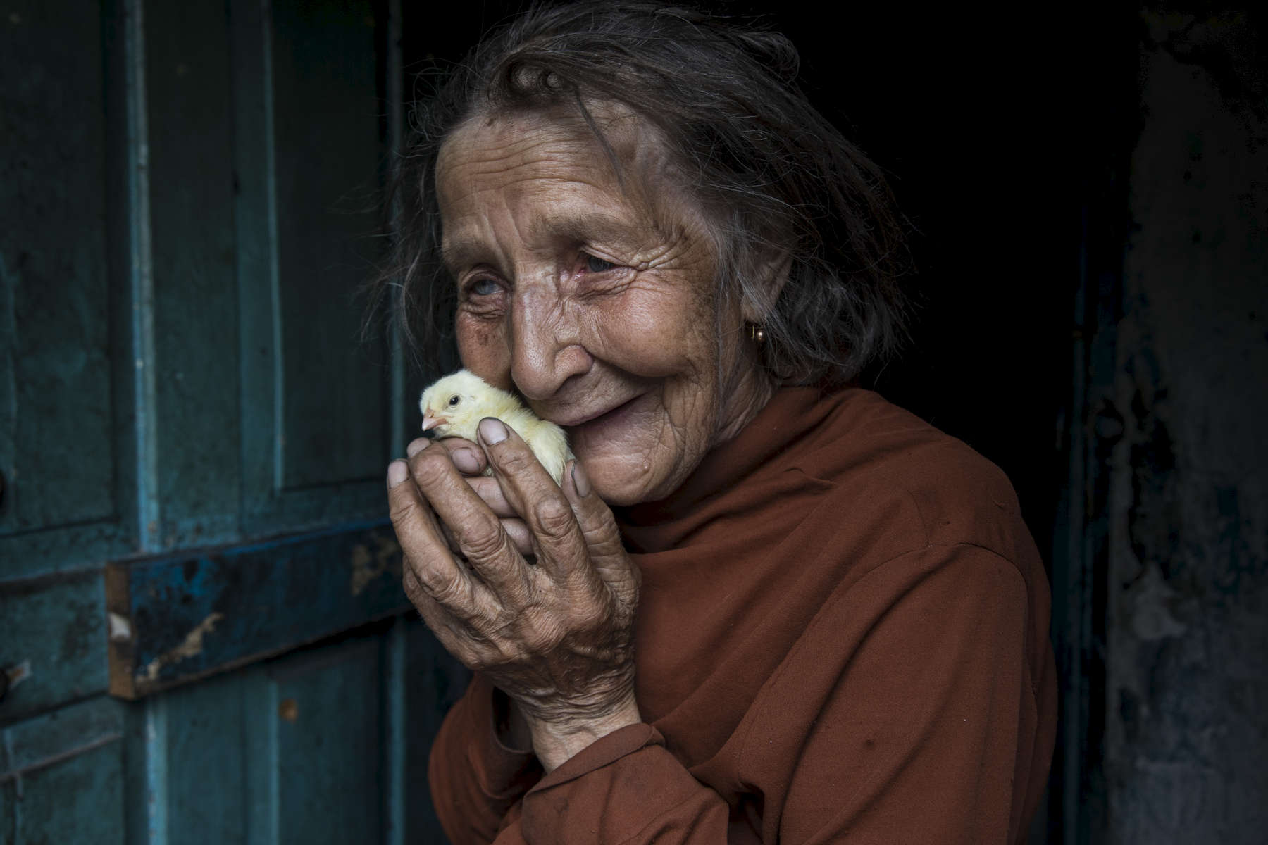Opytne, Eastern Ukraine:  Mariya Gorpynych, age 76, lives alone. She holds new chicks delivered by ICRC as part of a humanitarian aid service for elderly that live alone. It also allows them to raise chickens for some income. She speaks with tears in her eyes when talking about the death of her son. Victor,48 was killed due to the war in 2016, he was fatally injured by shelling that hit the home. He died in her hands. Her husband, died in the same year from a heart attack  from extreme stress of living too close to the front line. Mariya refuses to leave her village because her family are buried there.{quote}I have nowhere to flee, my whole family is buried here.{quote}  {quote}I got used to the continued shelling.{quote} Opytne is a war torn village on the contact line where only 43 people are left due to the dangers.