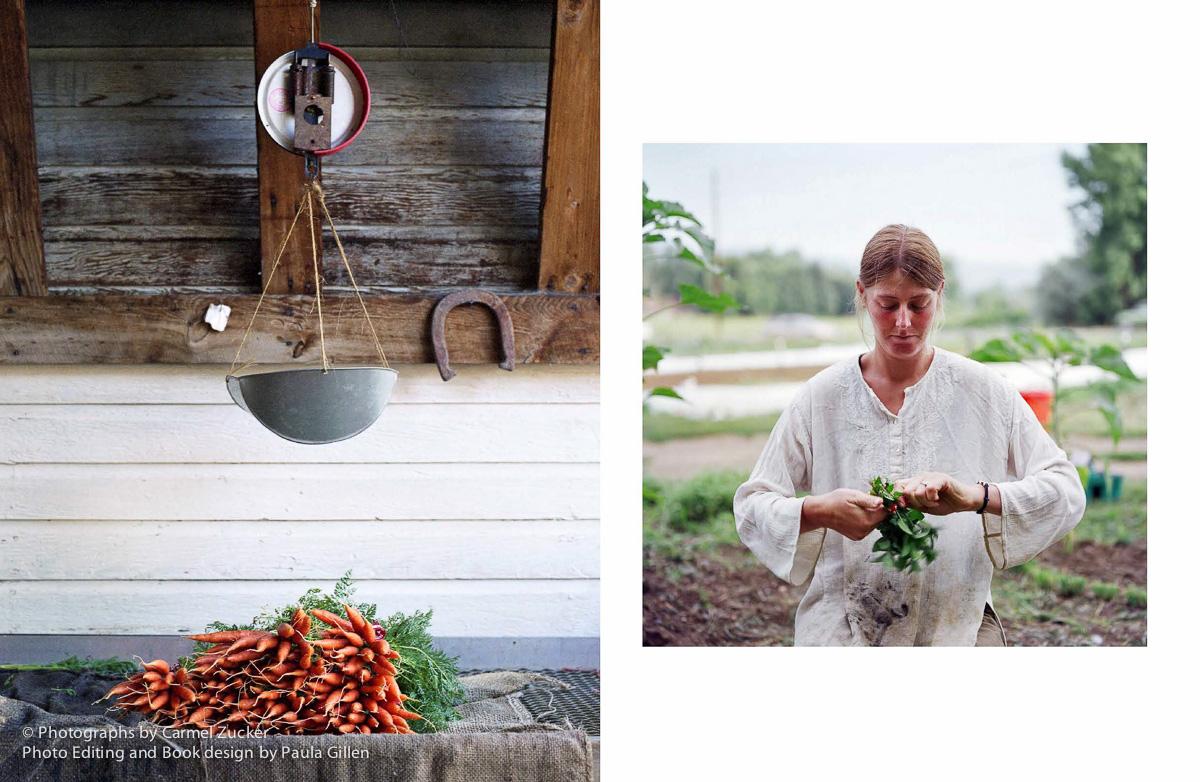 Carmel_Farm_Page_09