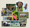 Client: ECOS CommunicationsProject: Denver Zoo Asian Animal ExhibitionProject Details: Hired to locate and license images of a variety of Asian animals and their specific behavior.  Also, locate images of S.E. Asian cultural topics and environmental issues for same exhibit. Images were used on outside panels with text.