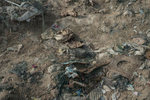 Human bones and clothes lay on a mass grave in Hammam al-Alil, Iraq on Jan. 8, 2017. ISIS disposed garbage in the same time to dishonour their victims. Hundreds of people has been shot dead or crushed with a backhoe loader during three nights. Neighborhood residents heard people crying but couldn't take action to avoid the monstrosity by ISIS. Some experts came after but the place remained intact.