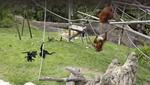 San Diego Zoo, San Diego, California. April 29, 2020, 12:55:22 PM PST