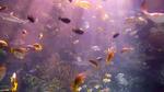 Coral reef aquarium, Aquarium of the Pacific, Long Beach, California. May 13, 2020, 4:36:32 PM PST