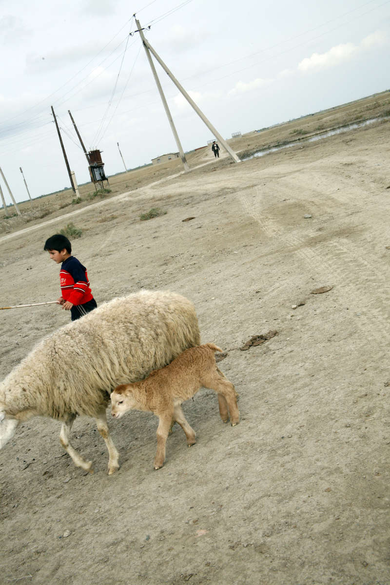 A young boy tends sheep at a camp in the Lachin Wintergrounds, a vast plain used for winter grazing but which is now year-round home to refugees from the fighting in the disputed Nagorno Karabakh area.