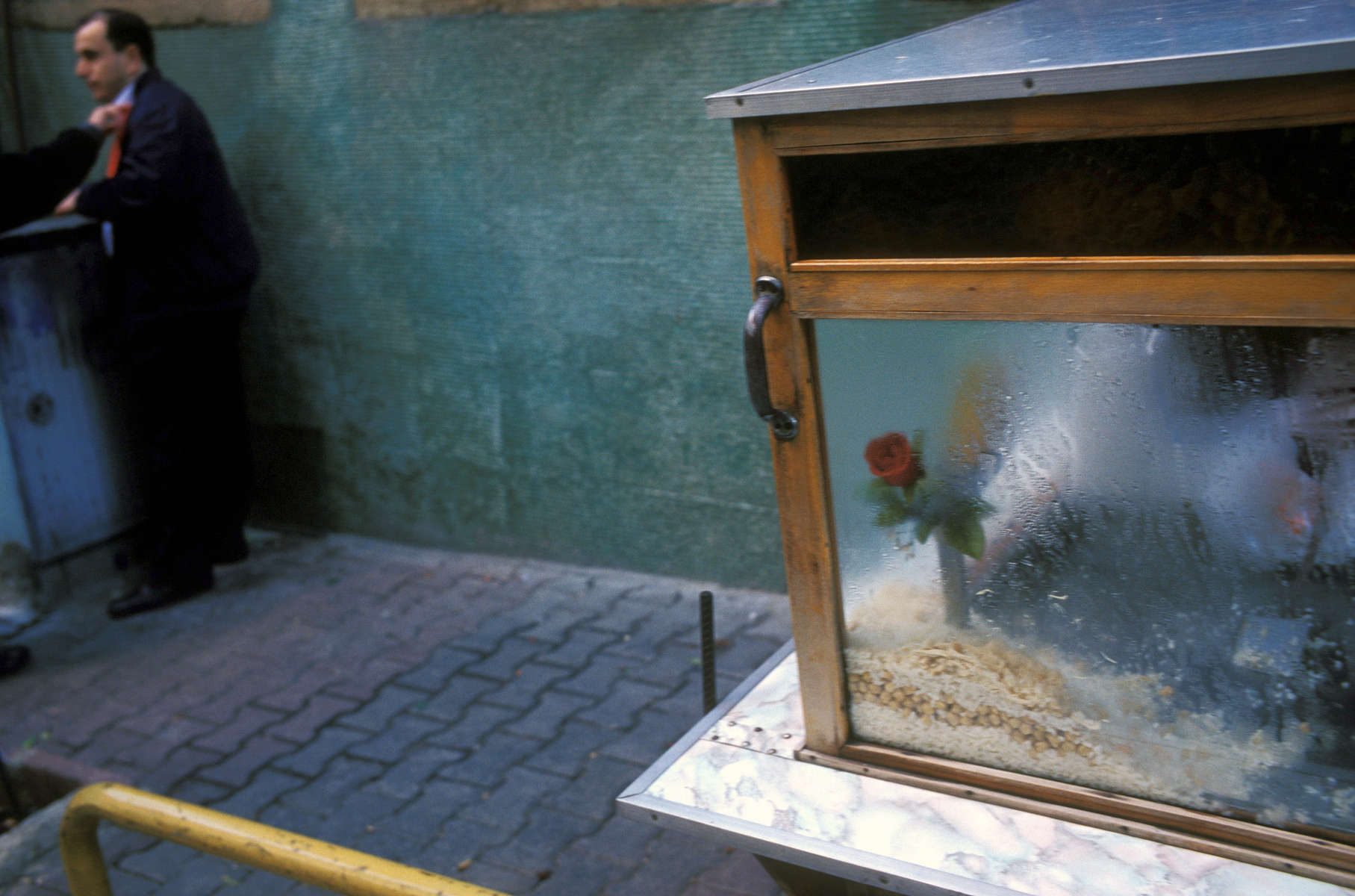 A rose sits behind the glass of a food vendor\'s cart which contains a mix of rice, chick peas and chicken. November 2004.