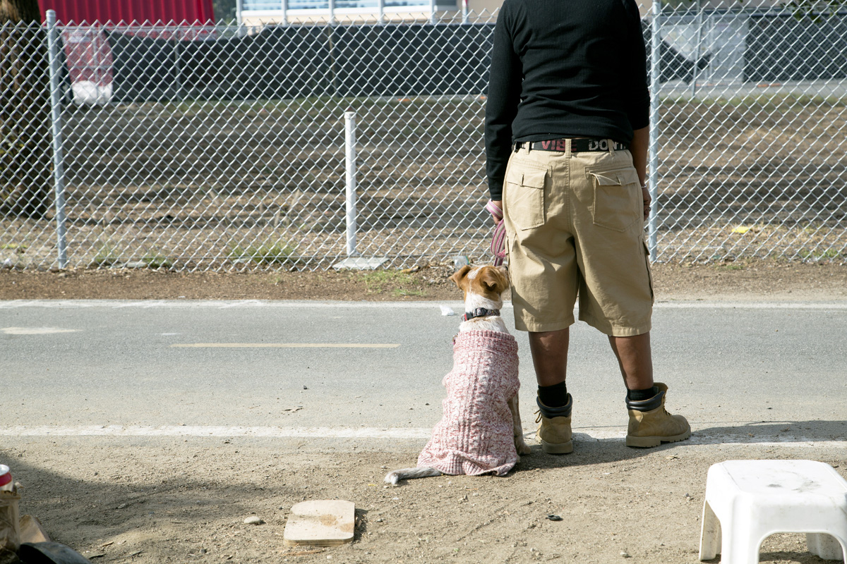 Many residents of the encampment have dogs, which makes shelter placement more difficult. Some living places won't accept animals; few homeless people are willing to give up their pets as the price for having a roof over their heads.