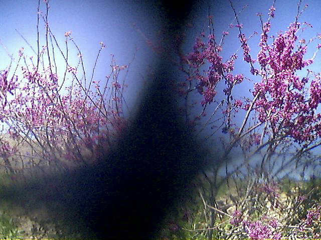 Flowering bushes in the countryside outside of Kabul.