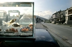 A roadside vendor, hoping to attract passing drivers, offers goldfish for sale.