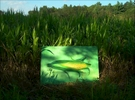 A large oil painting is dwarfed by the real thing, corn in season, Rehoboth, Ma