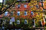 Bowen Street on Fall Day
