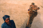 Memorable moment riding camel at site of Great Pyramid at Giza, Egypt