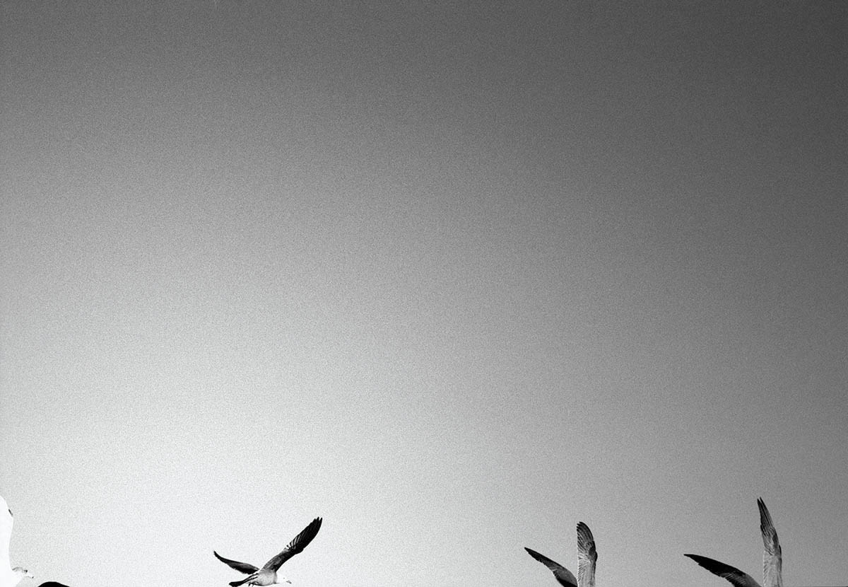 Birds, NIN