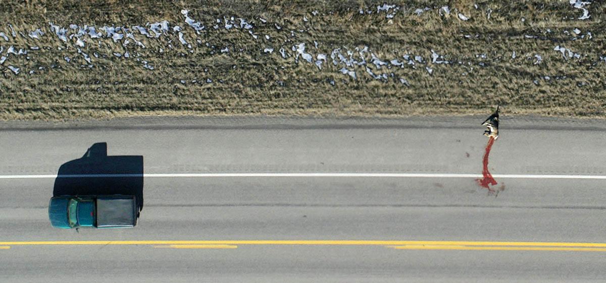 roadkill, gallatin county, montana
